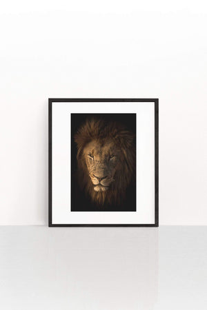 Lion in the Dark
