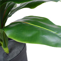 Artificial Potted Wide Leaf Birds Nest Fern 50cm Kings Warehouse