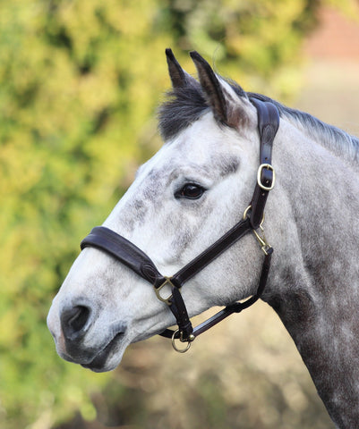 Blenheim Deluxe Travel Headcollar