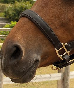 Heritage Padded Leather Headcollar