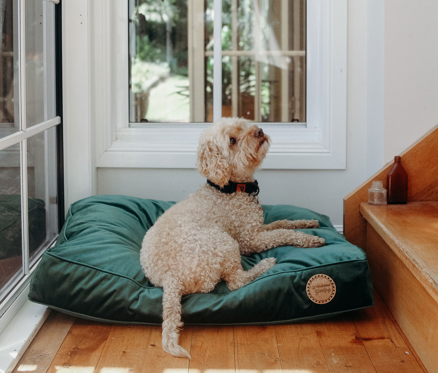 Seconds: Evergreen - Velvet Spread Dog Bed (Medium)