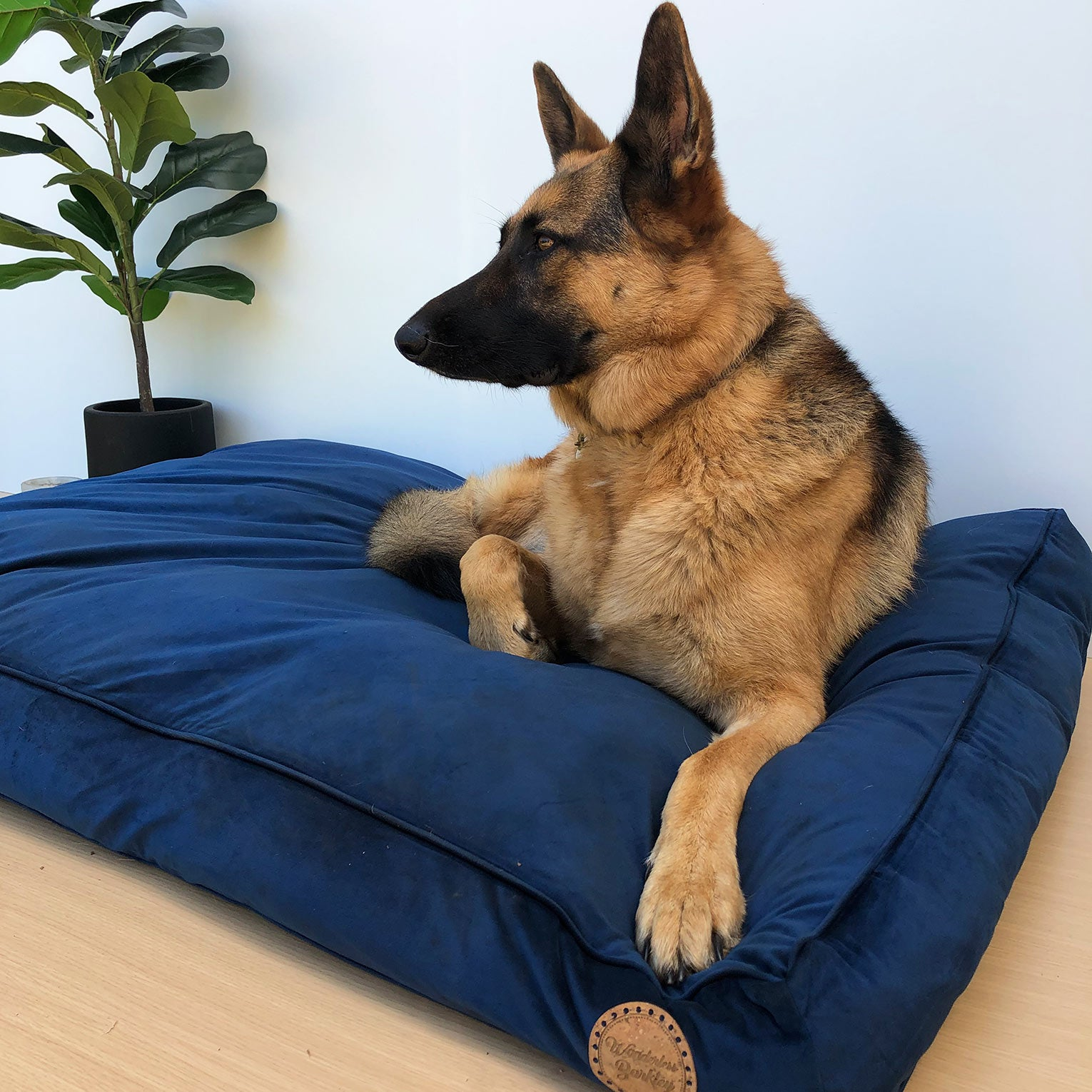 Seconds: Midnight - Velvet Spread Dog Bed (Large)