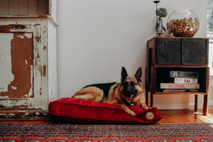 Scarlet - Velvet Spread Dog Bed