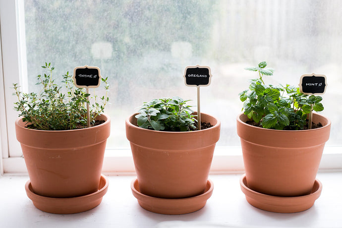 Your Ultimate Guide to Growing Herbs Indoors