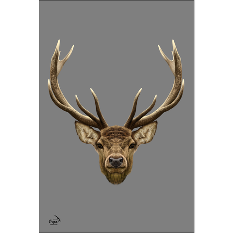 Stag Poster Grey