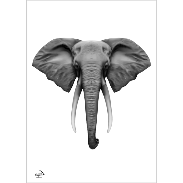 Elephant Poster Black/White