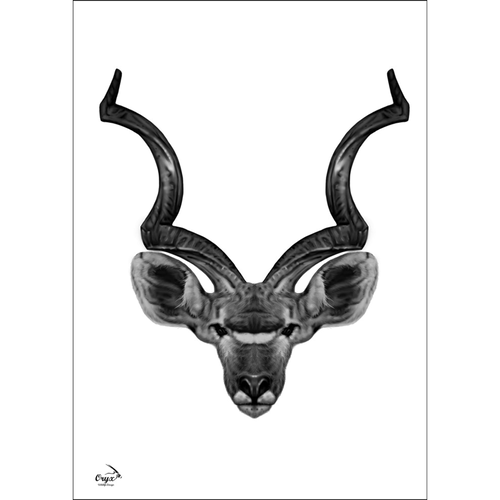 Kudu Poster Black/White