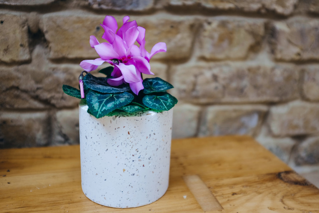 Speckled Concrete Planter - Medium