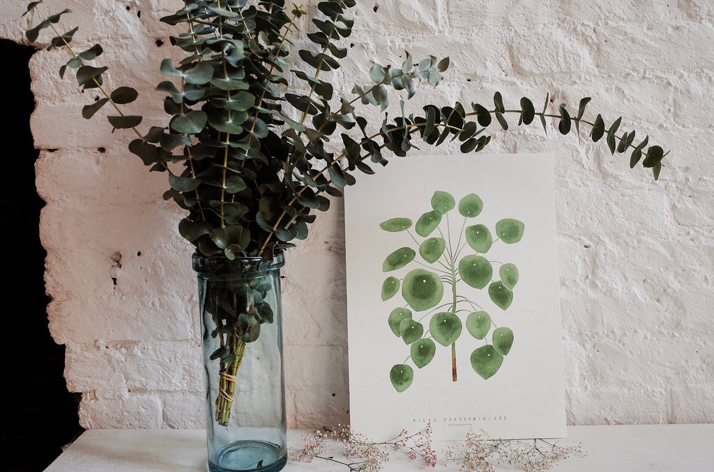Pilea Peperomioides Living Pattern Print
