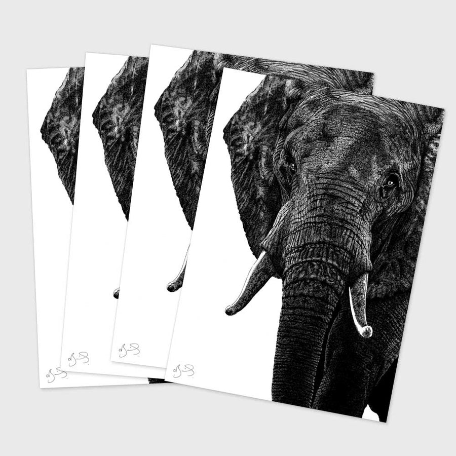 Postcard - Elephant (Pack of 4)