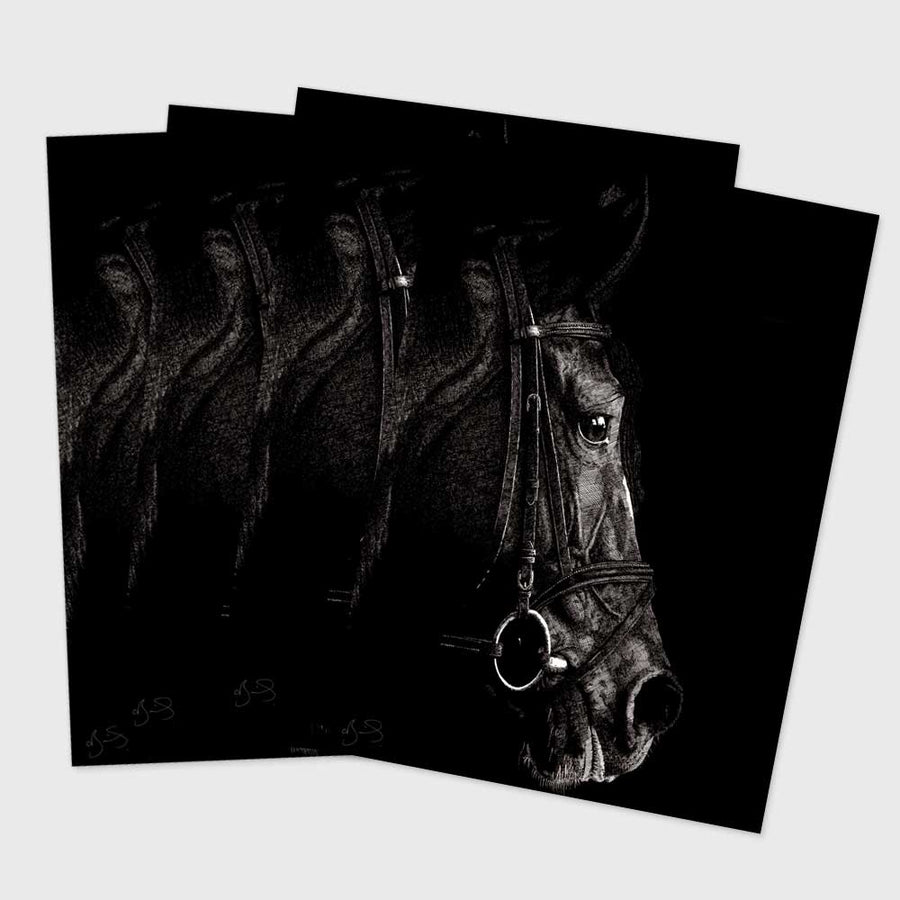 Postcard - Horse 01 (Pack of 4)