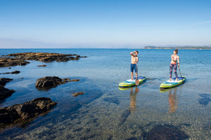 Wildlife Species to Spot While Paddleboarding