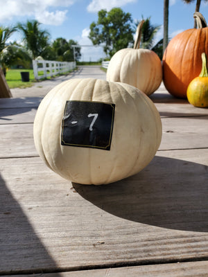 White pumpkin small