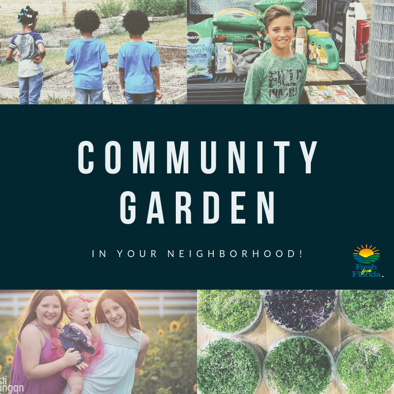 Fall/Winter  Season Community Garden Registration