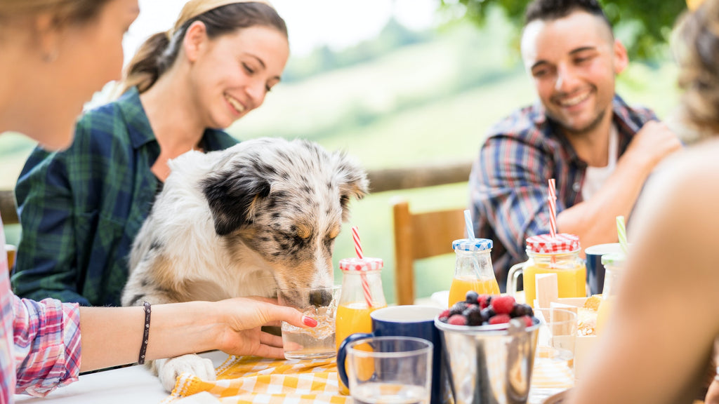 Five Ways Dog Moms Can Celebrate Mother's Day