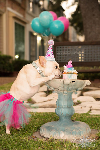 Dog Birthday Photo Shoot (2)