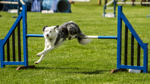 Dog Obstacle Course | Dallas Dogs | Dog Party | Dog Games