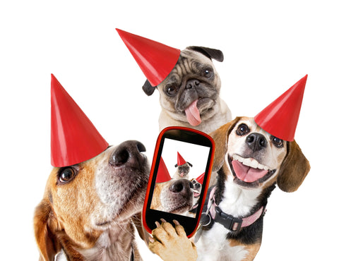 dog birthday hats, beagles birthday