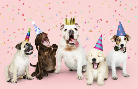 party for dogs, dog birthday