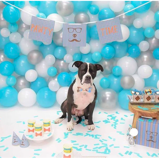 DIY Dog Birthday Party Kits