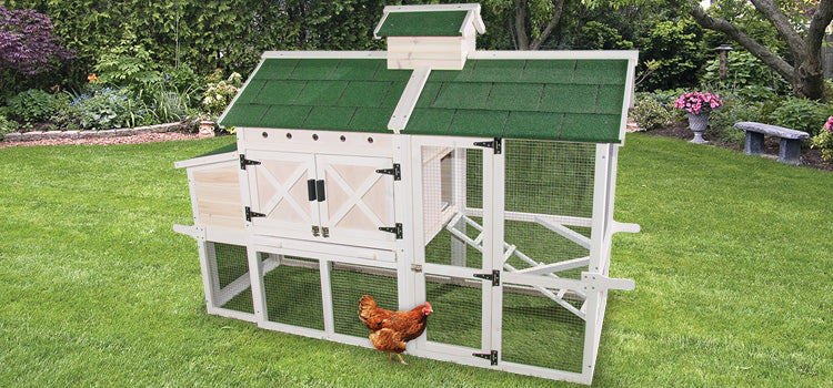 CHICKEN COOP CHEATAU