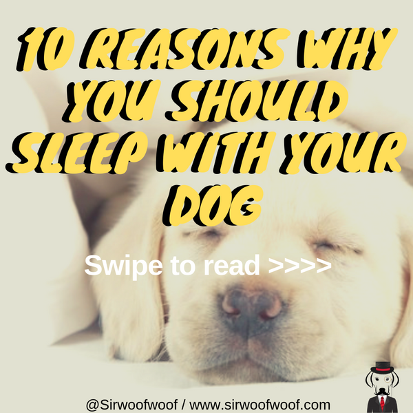 10 Reasons why you should sleep with your dog in your bed