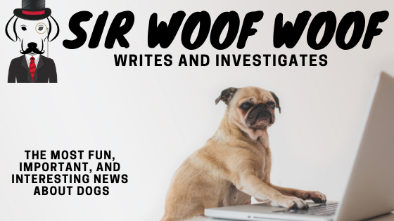 sir woofwoof news about dogs