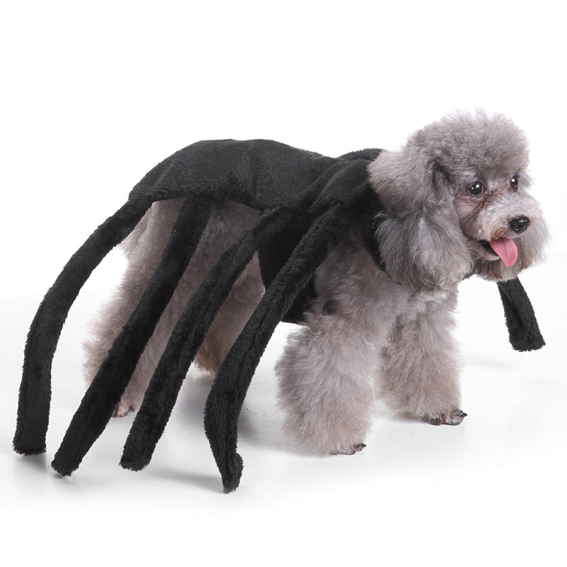 Funny Spider Halloween Dog Costume