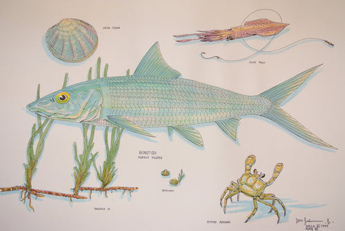 Bonefish Watercolour