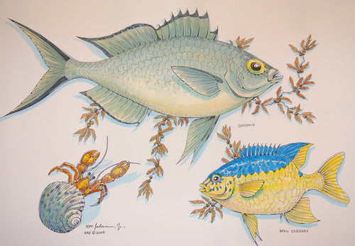 Chromis Watercolour