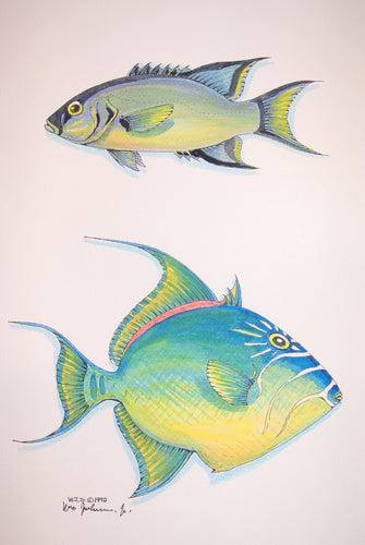 Trigger Fish Watercolour