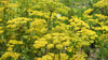 Pretty. Nasty. Stuff. <BR>A warning about Wild Parsnip
