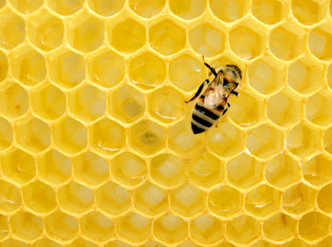worker bee on yellow honeycomb, what is the symbolism of bees, are bees magical, bee jewellery