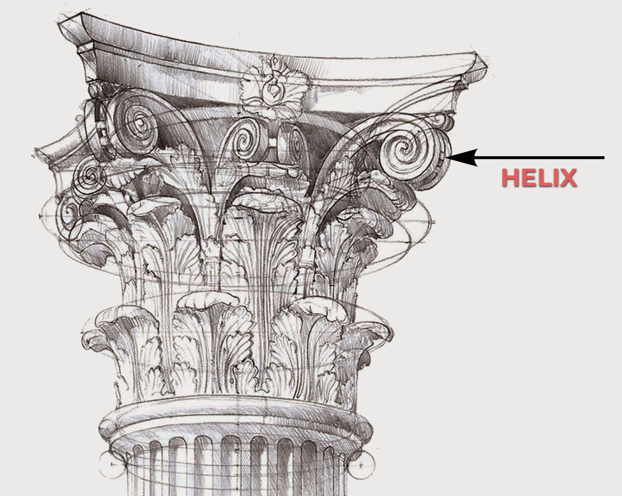 illustrated sketch of a helix on a roman corinthian capital for brockwell incorporated's glossary of architectural terms