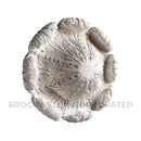 Beautiful Roman Style Plaster Ceiling Medallion at ColumnsDirect.com