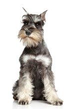 VITALIZING DOG SHAMPOO FOR POODLES, TERRIERS, SCHNAUZERS 9 oz.