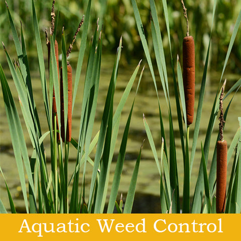 Aquatic Weed Control Products