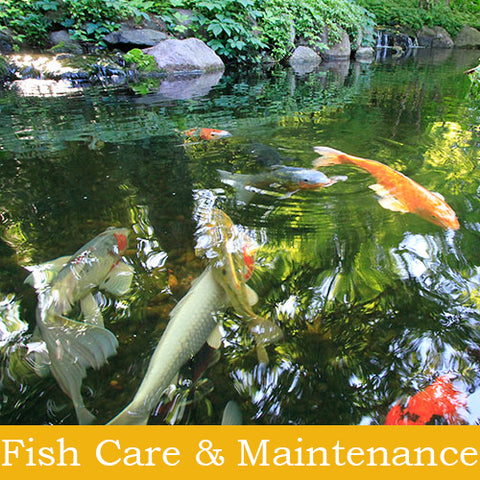 Fish Care & Maintenance Tools