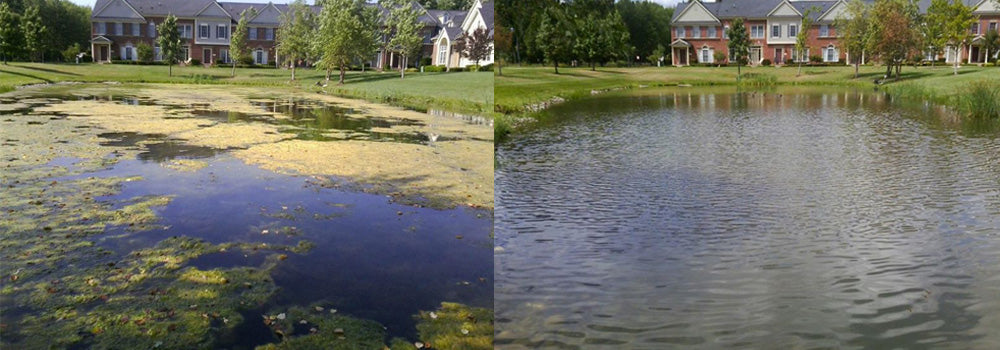 Algae Before and After