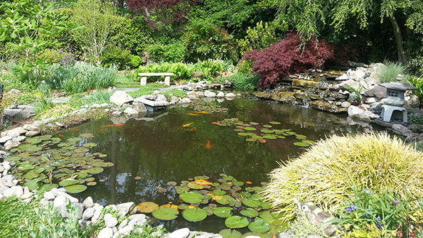 Lake pond water garden supplies pond algae control for Koi pond store