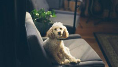 Home décor do's and don'ts for homeowners with pets