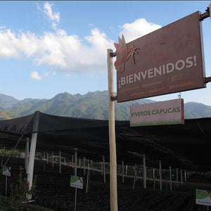 Honduras Las Capucas | Single Origin - Ubora Coffee