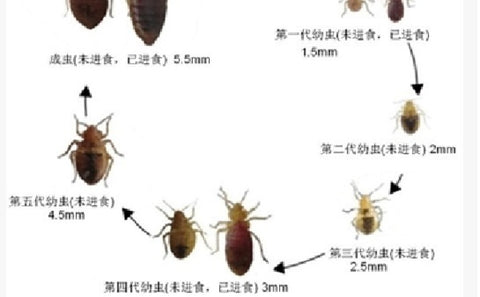 The Best Product in the world to kill Bed Bugs     全球最好的殺滅床蝨產品