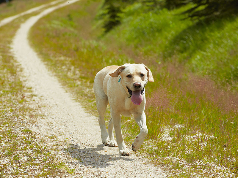 Five ways to prevent your dog from getting lost