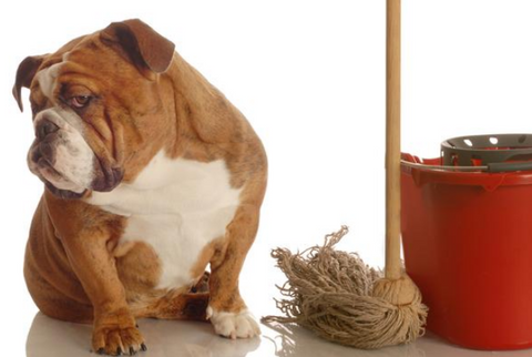 How To Clean Dog Pee From The Carpet Wopet