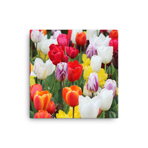Beautiful Tulips on Canvas - VIP Wall Art and Decor