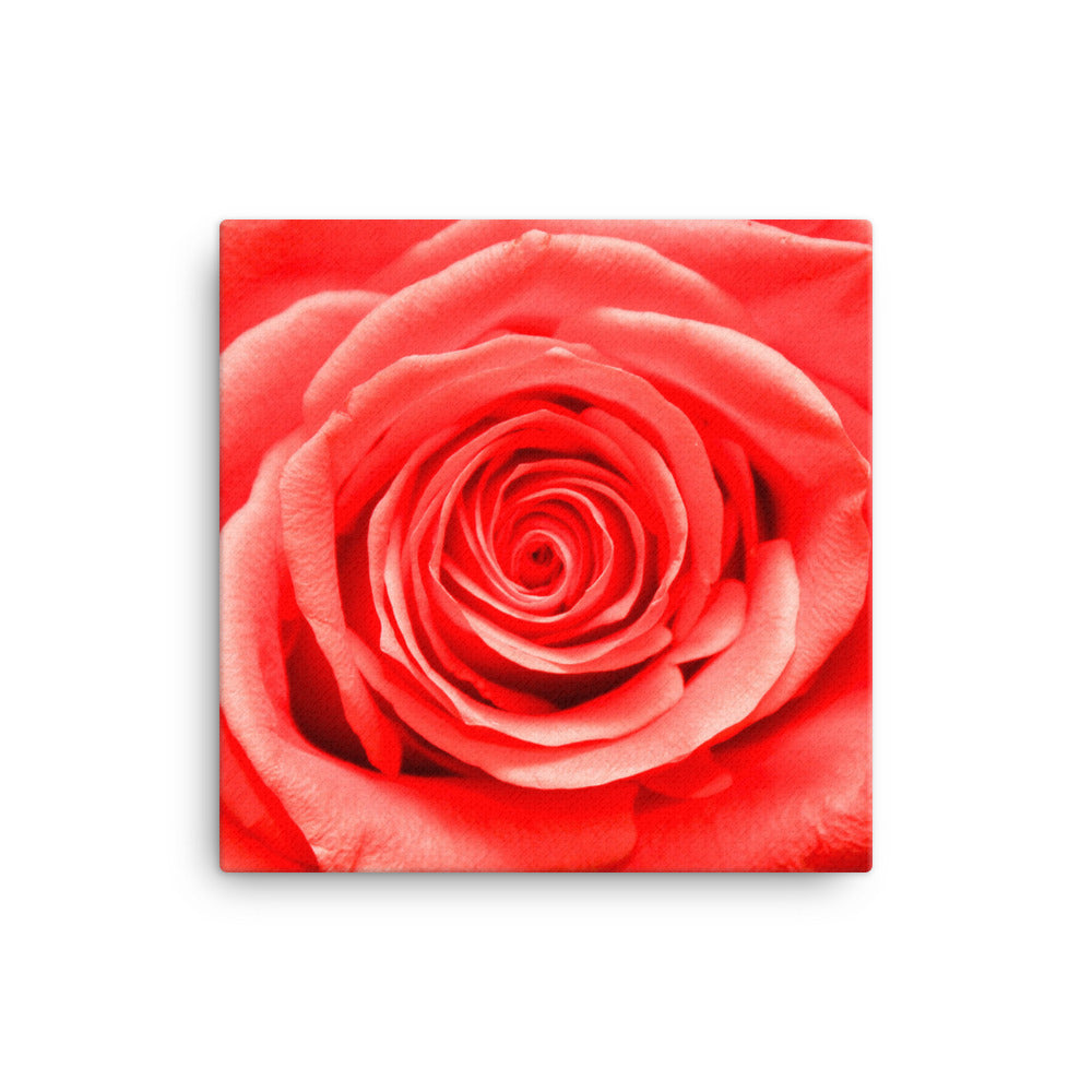 VIP Beautiful Rose on Canvas - Original VIP Photograph