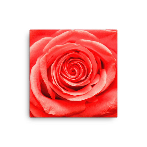 Beautiful Rose on Canvas - VIP Wall Art and Decor - Original Photography
