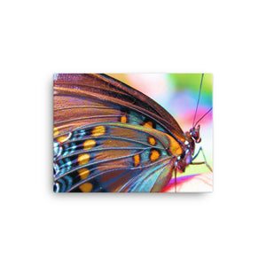 Colorful Butterfly on Canvas - Original VIP Photography
