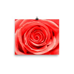 Beautiful Rose Poster - VIP Wall Art and Decor - Original Photography